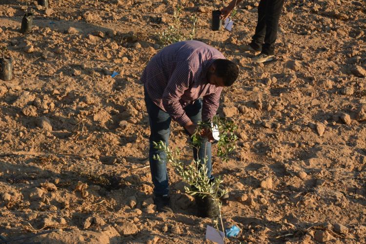 Bağışlarınız Gazze'de İyilik Ormanı Oldu