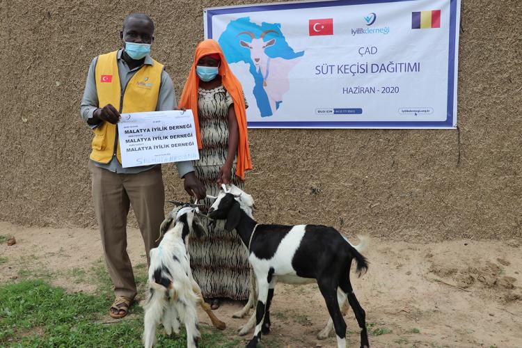Süt Keçileri Kamerun ve Çad'ta Ailelere Hediye Edildi