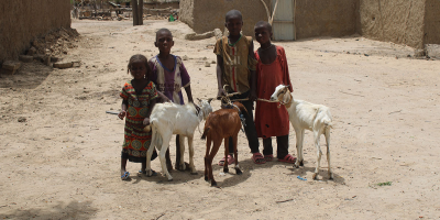 Kamerun ve Çadlı Aileler Süt Keçilerine Kavuştu
