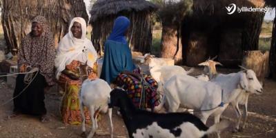 Süt Keçisi Projesi ile Afrikalı Aileleri İş Sahibi Yapıyoruz!